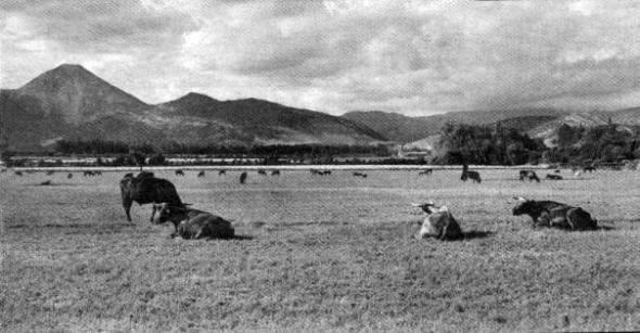 Las Condes 1950